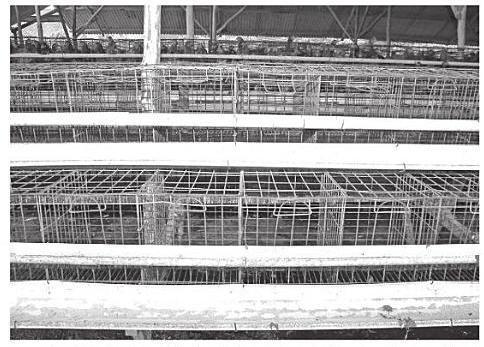 Kandang batere untuk ternak itik adalah kandang yang dibuat untuk